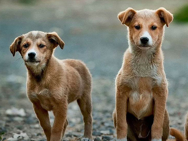 China Top 10 Pet Trading Website