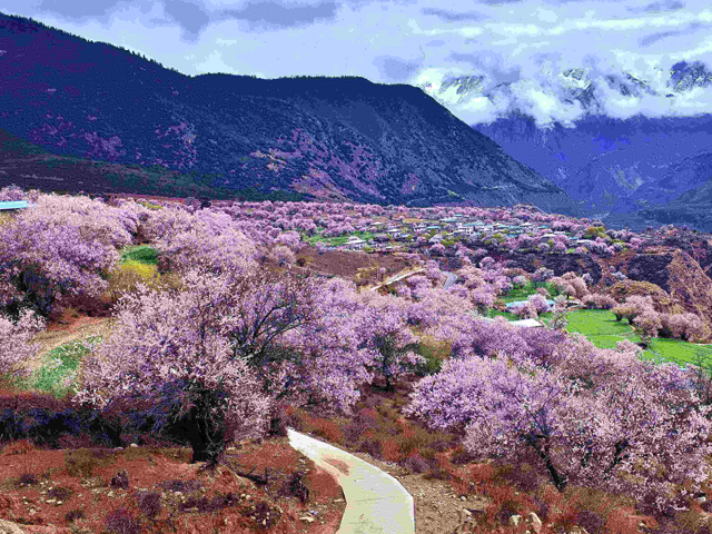 Top 10 Best Places To See Flowers in China