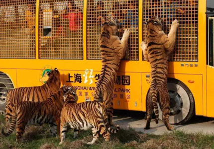 Top 10 Wildlife Parks in China