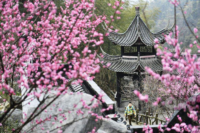 Top 10 Most Beautiful Plum Gardens in China-Meiling plum