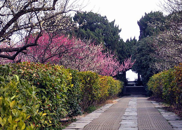 Top 10 Most Beautiful Plum Gardens in China-Nanjing Plum Mountain