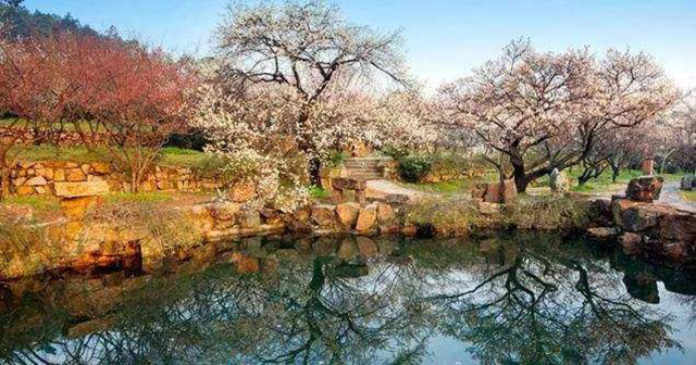 Top 10 Most Beautiful Plum Gardens in China-Suzhou Guangfu Plum Garden