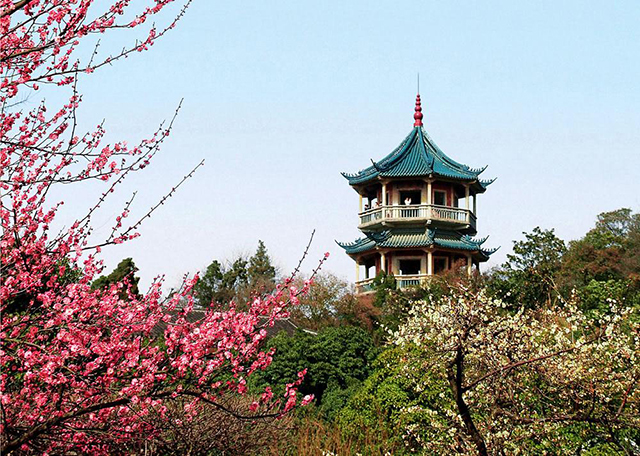 Top 10 Most Beautiful Plum Gardens in China-Wuxi Plum Garden