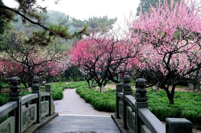 Top 10 Most Beautiful Plum Gardens in China-Xinzhuang Park