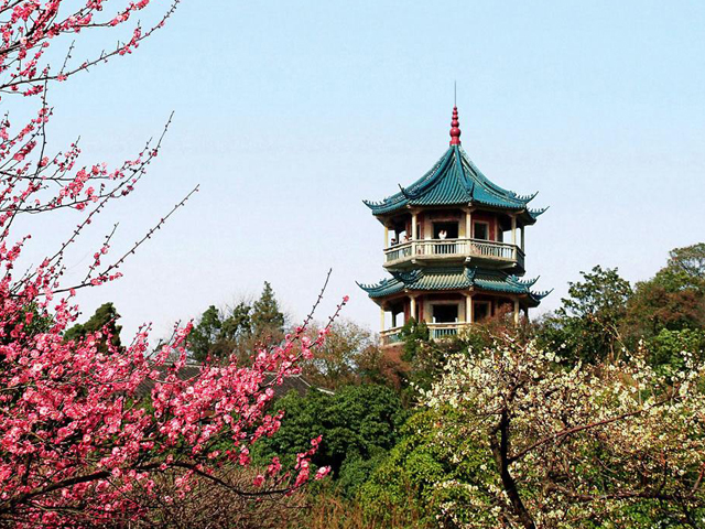 Top 10 Most Beautiful Plum Gardens in China