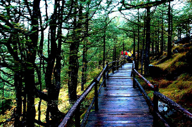 Top 10 Most Beautiful Forest Parks in China-Taibai Mountain National Forest Park