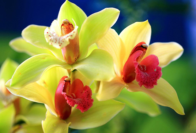 Top 10 Famous Flowers in China-Orchid – the flower of the gentleman